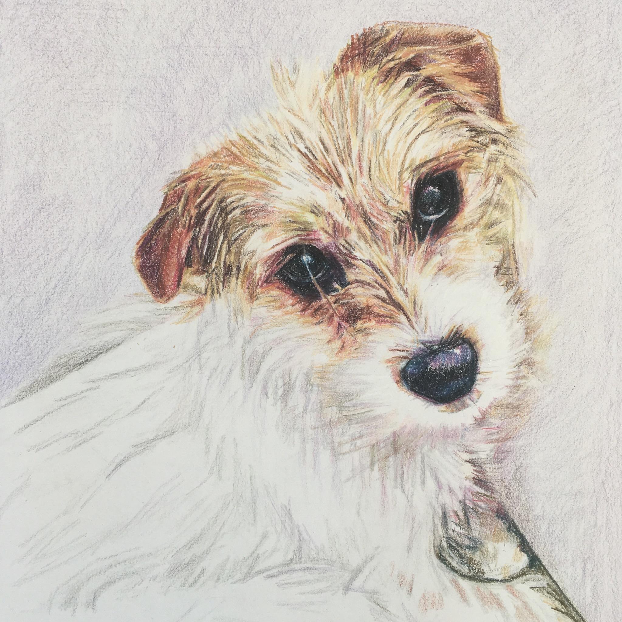 Meet Minnie The Greek Pup!